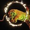 Цирки в Кувшиново