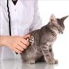 Ветеринарные клиники в Кувшиново